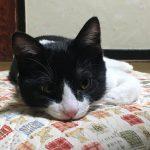 『うちの実家の猫が本当にかわいい』