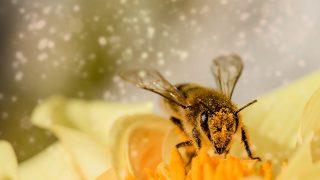 『ハチに一日に二回(五ヶ所)刺された話/ADHD』